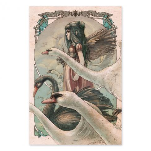 Cisnes - Color