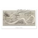 Feeding the dragon drawing (Collector sheet)