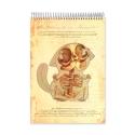 Anatomy Cuddle (Notebook)